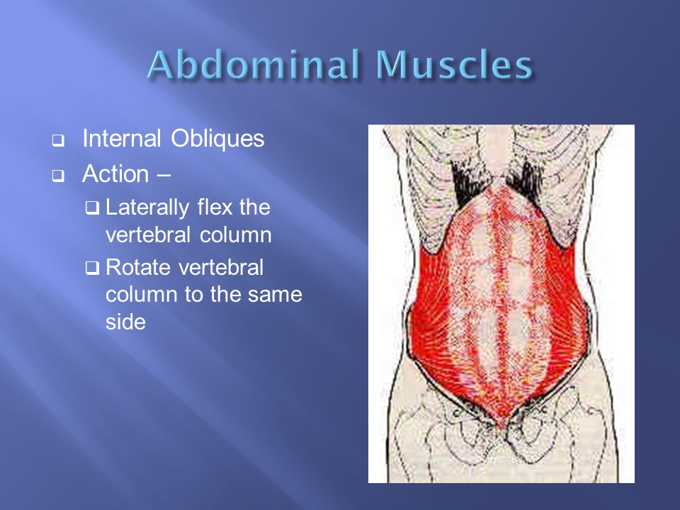 Abdominal Muscles Internal Obliques Action –