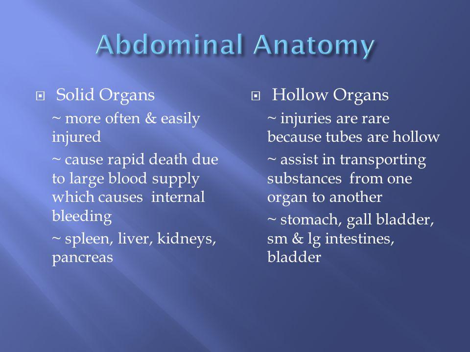 Abdominal Anatomy Solid Organs Hollow Organs