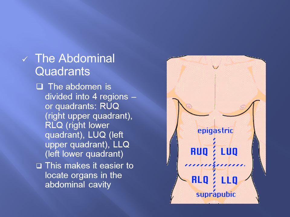 The Abdominal Quadrants