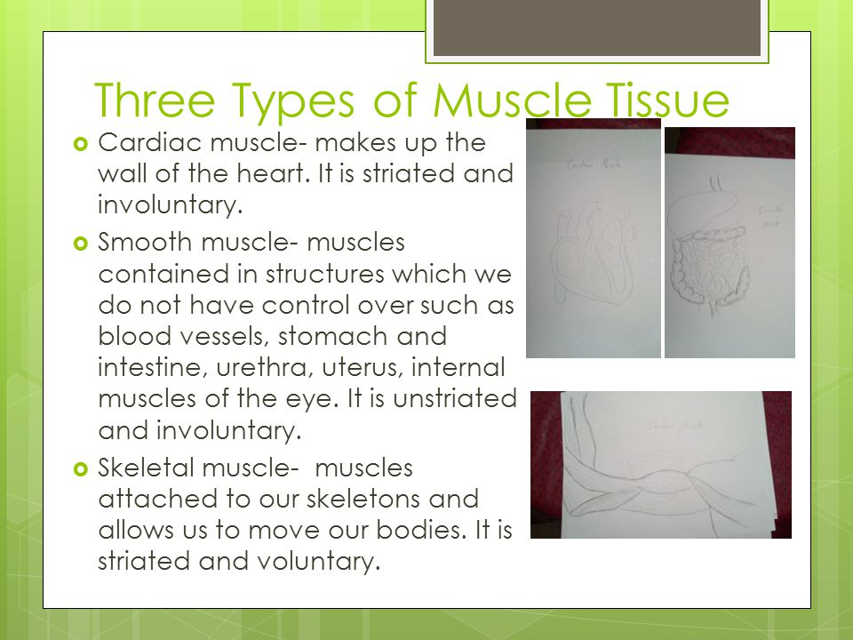Three Types of Muscle Tissue