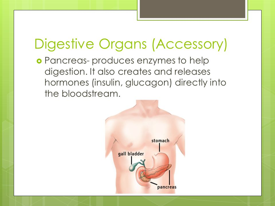 Digestive Organs (Accessory)