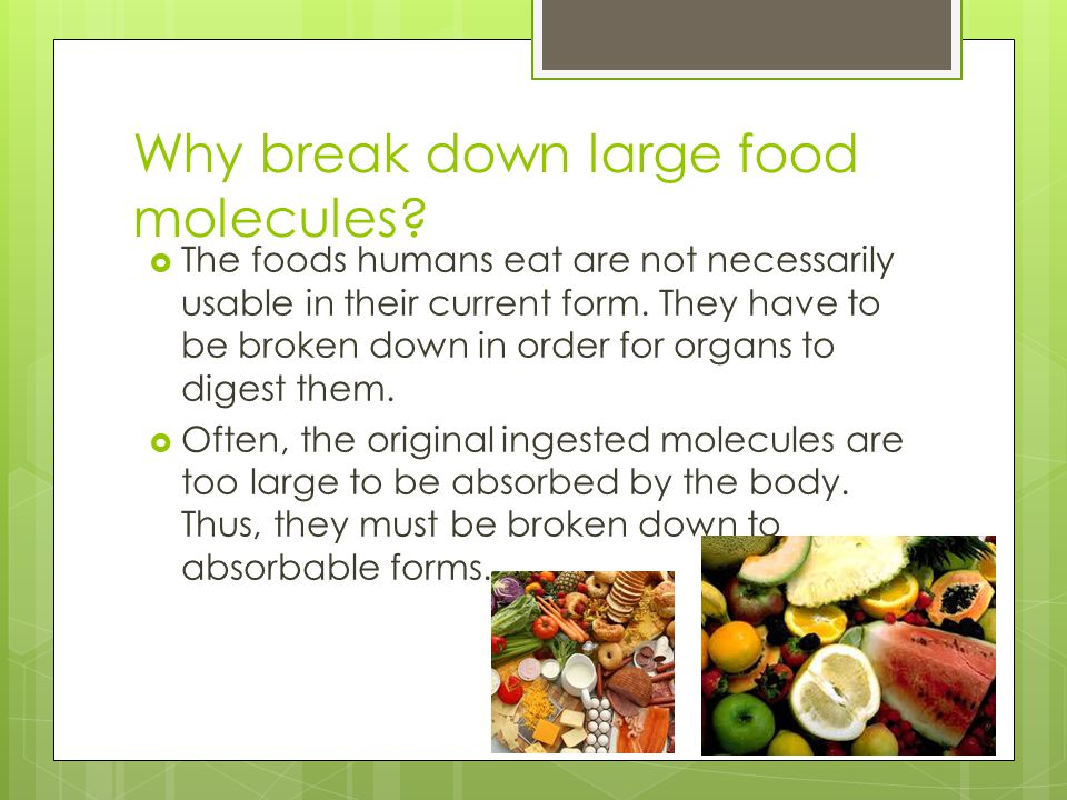 Why break down large food molecules