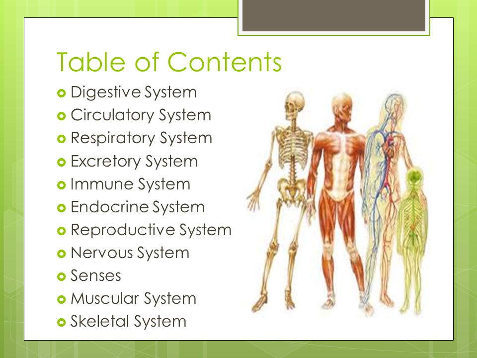 Table of Contents Digestive System Circulatory System