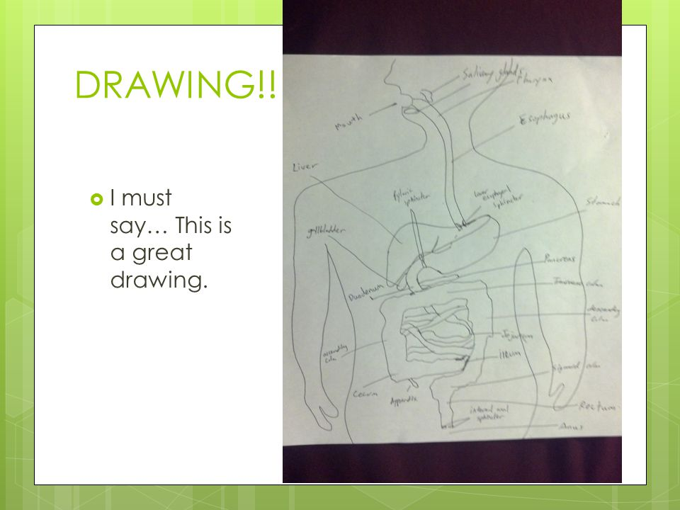 DRAWING!! I must say… This is a great drawing.