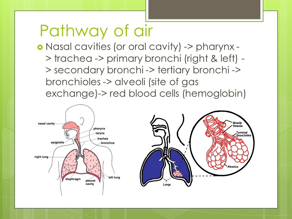 Pathway of air