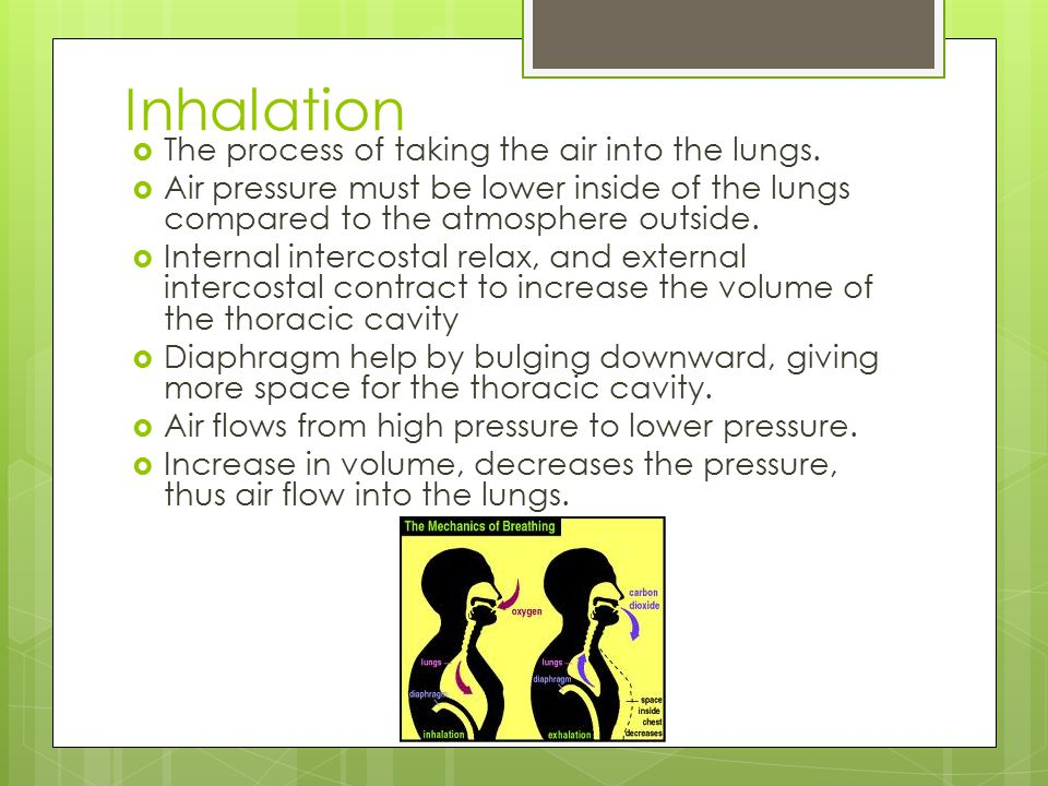 Inhalation The process of taking the air into the lungs.