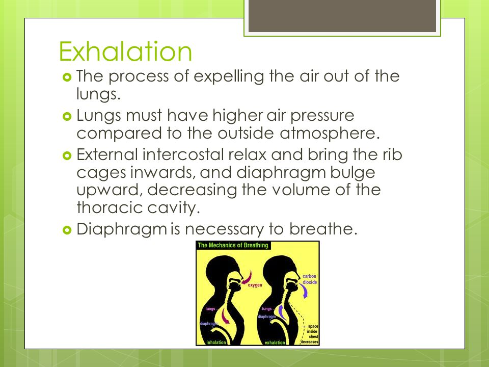 Exhalation The process of expelling the air out of the lungs.