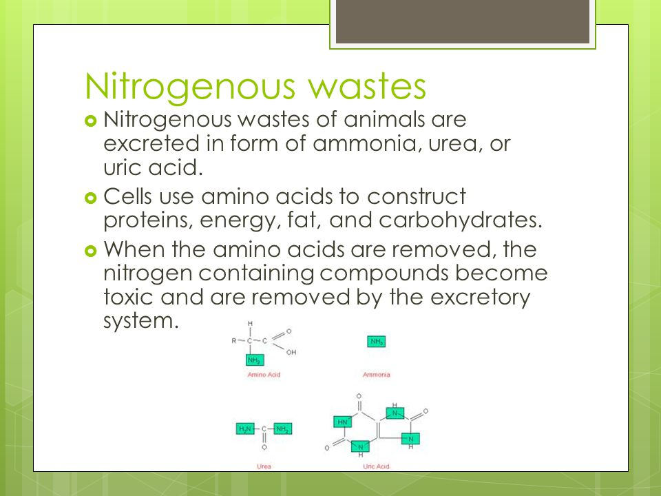 Nitrogenous wastes Nitrogenous wastes of animals are excreted in form of ammonia, urea, or uric acid.