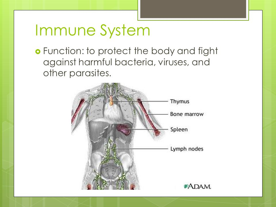 Immune System Function: to protect the body and fight against harmful bacteria, viruses, and other parasites.