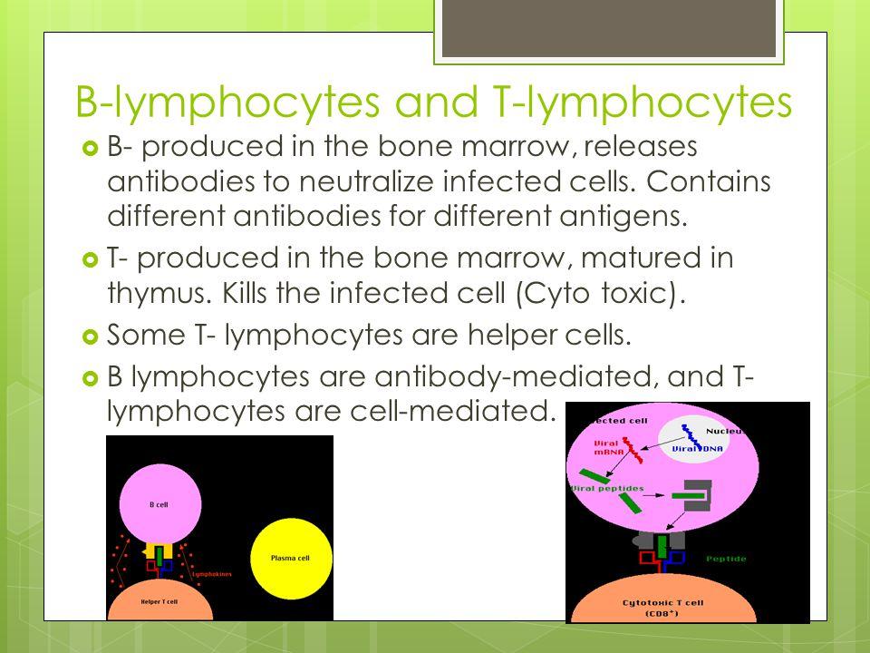 B-lymphocytes and T-lymphocytes