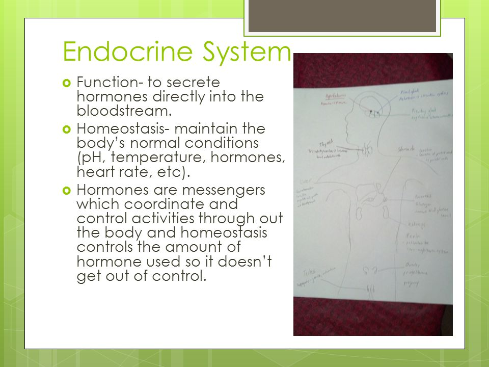 Endocrine System Function- to secrete hormones directly into the bloodstream.