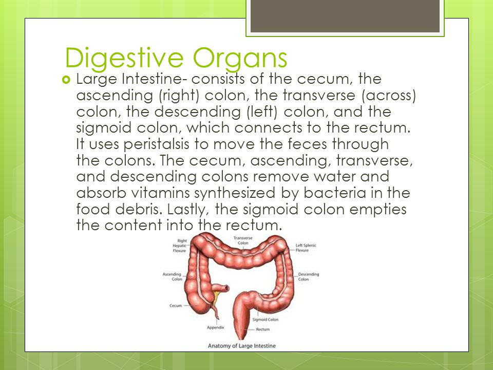 Organs That Help Remove Digested Food And Water