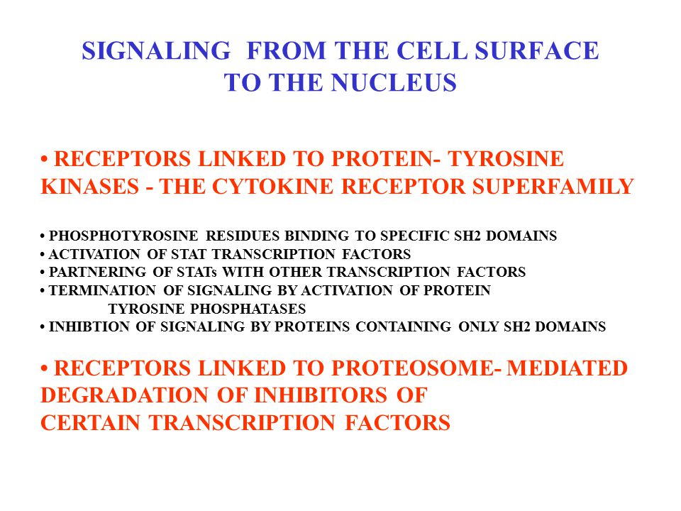 SIGNALING FROM THE CELL SURFACE TO THE NUCLEUS