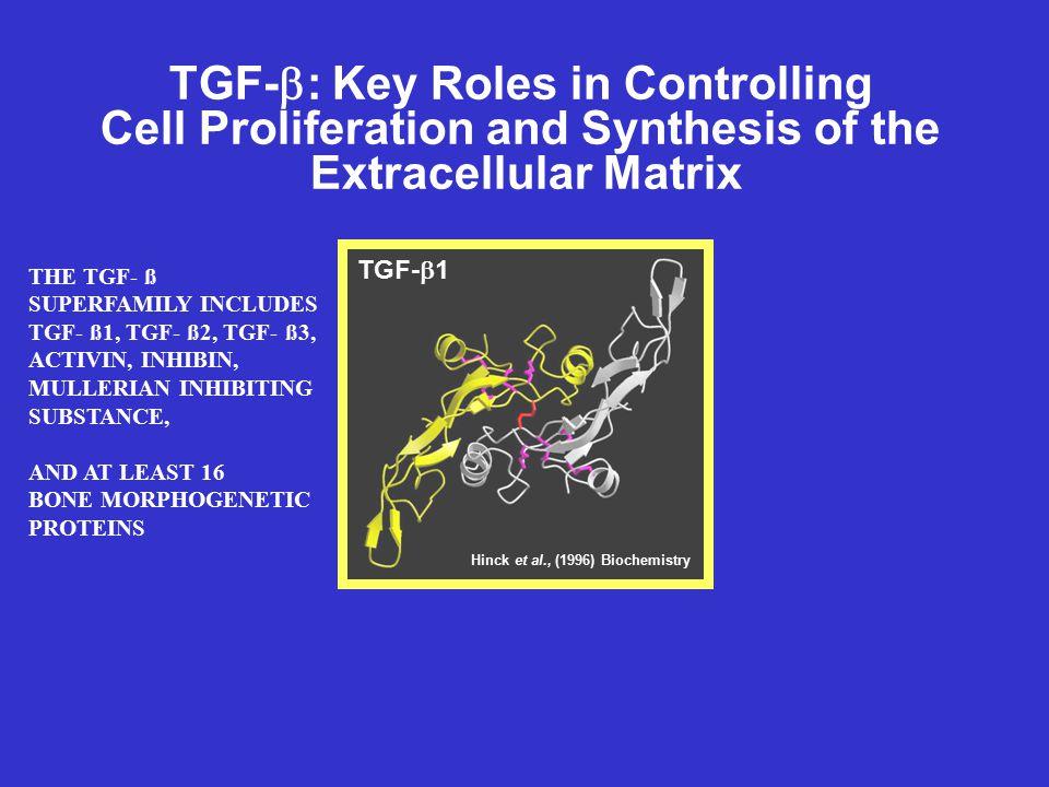 TGF-b: Key Roles in Controlling