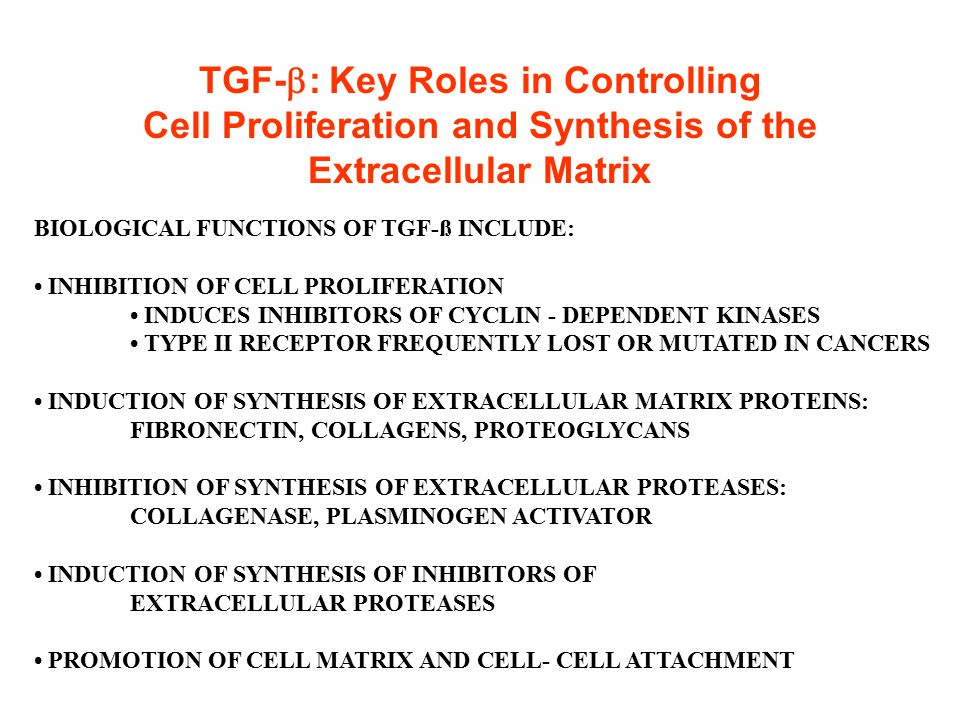 TGF-b: Key Roles in Controlling Cell Proliferation and Synthesis of the Extracellular Matrix