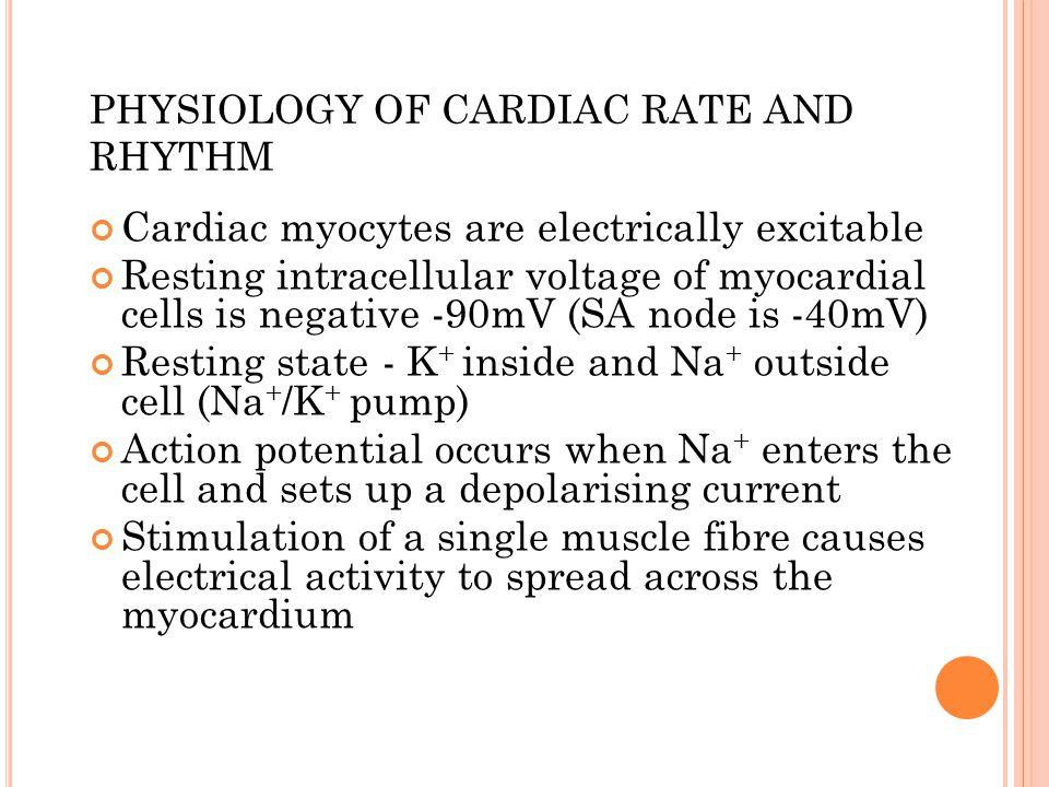PHYSIOLOGY OF CARDIAC RATE AND RHYTHM