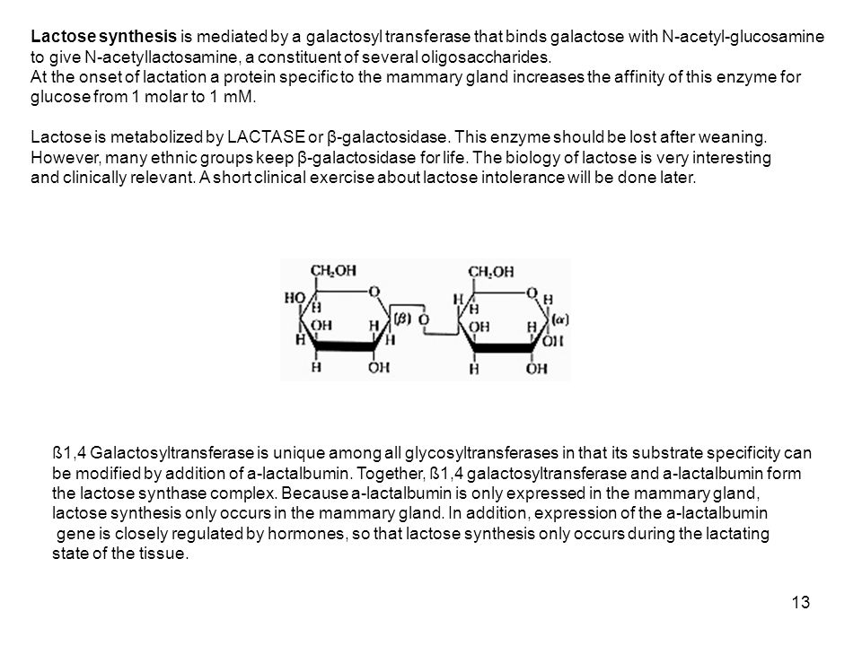 Lactose synthesis is mediated by a galactosyl transferase that binds galactose with N-acetyl-glucosamine