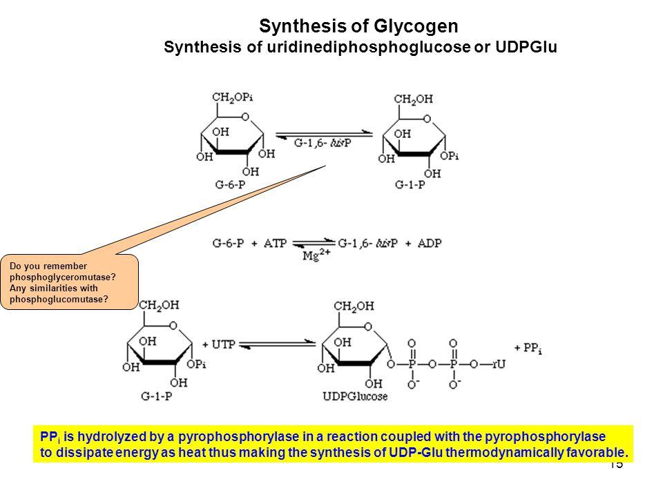 Synthesis of uridinediphosphoglucose or UDPGlu
