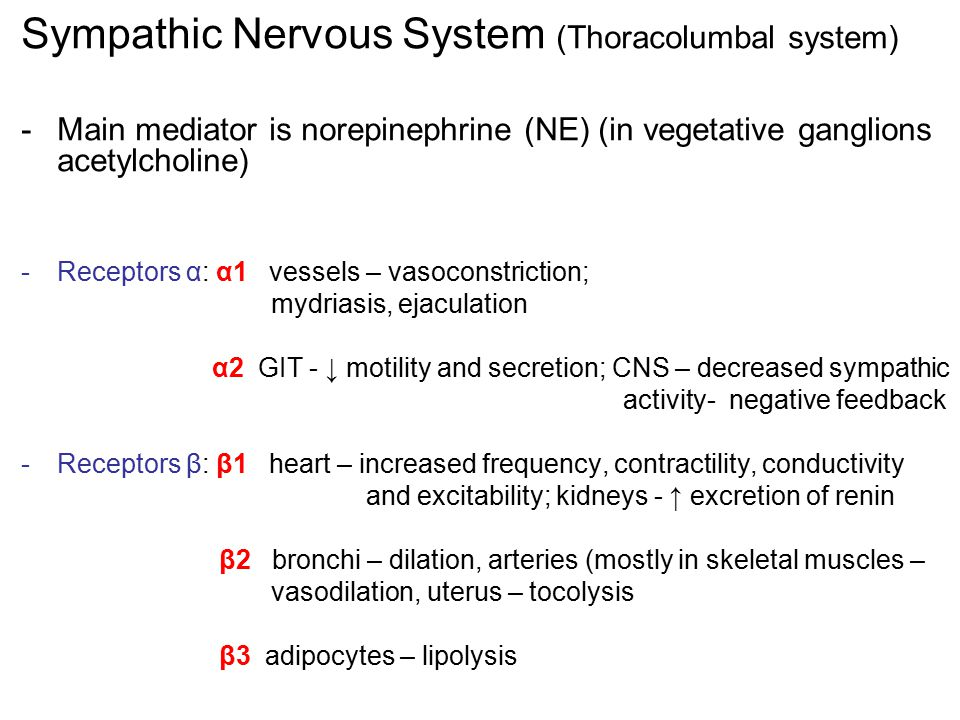 Sympathic Nervous System (Thoracolumbal system)