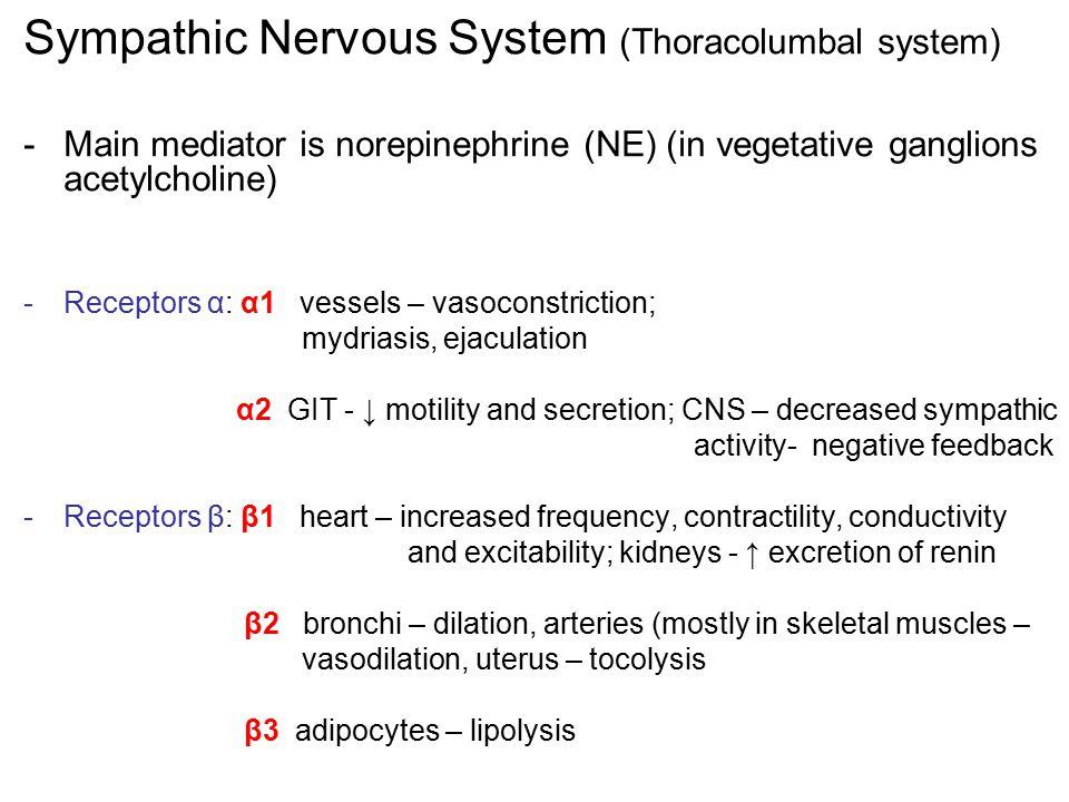 Sympathic Nervous System (Thoracolumbal system)