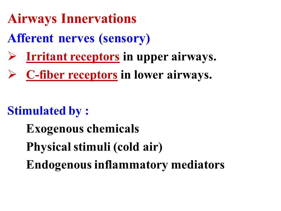 Airways Innervations Afferent nerves (sensory)