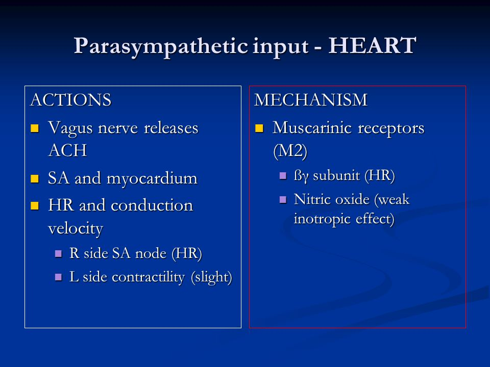 Parasympathetic input - HEART