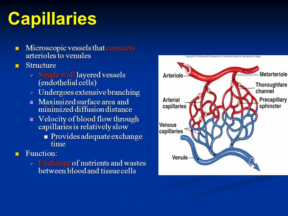 Capillaries Microscopic vessels that connects arterioles to venules