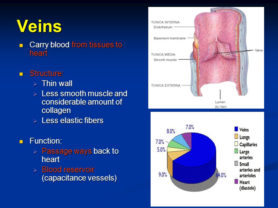 Veins Carry blood from tissues to heart Structure: Thin wall