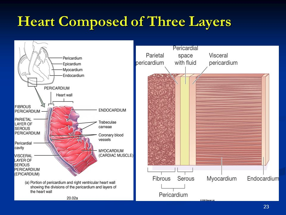 Heart Composed of Three Layers