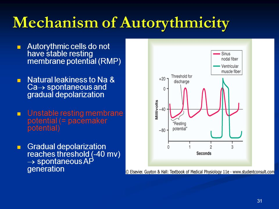 Mechanism of Autorythmicity
