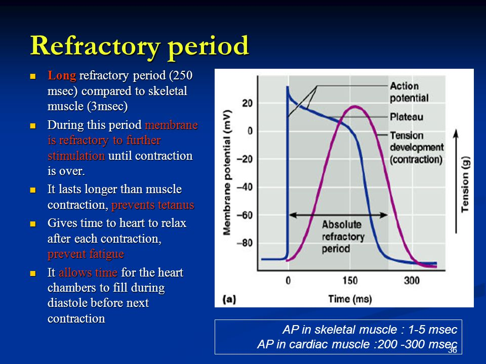 Refractory period Long refractory period (250 msec) compared to skeletal muscle (3msec)