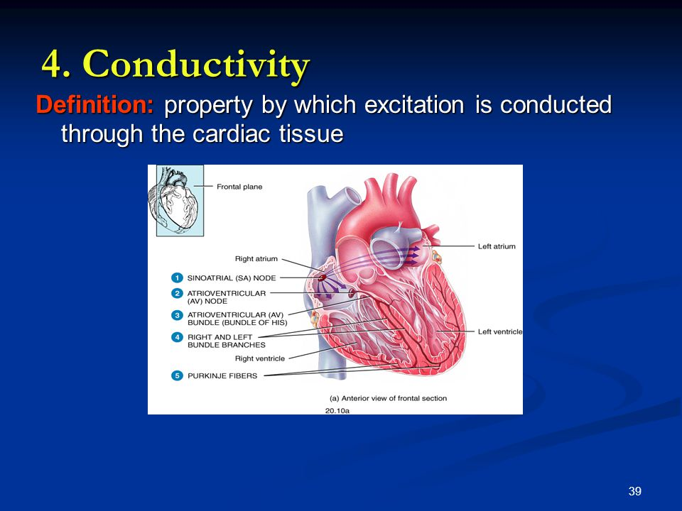 4. Conductivity Definition: property by which excitation is conducted through the cardiac tissue