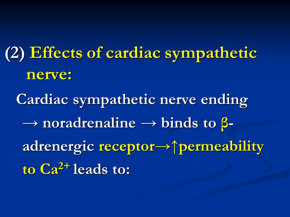 (2) Effects of cardiac sympathetic nerve: