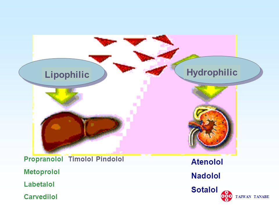 Hydrophilic Lipophilic Atenolol Nadolol Sotalol Propranolol Metoprolol
