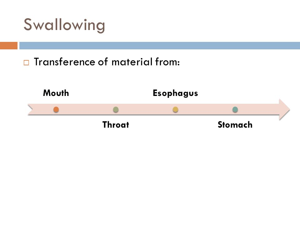 Swallowing Transference of material from: Mouth Throat Esophagus