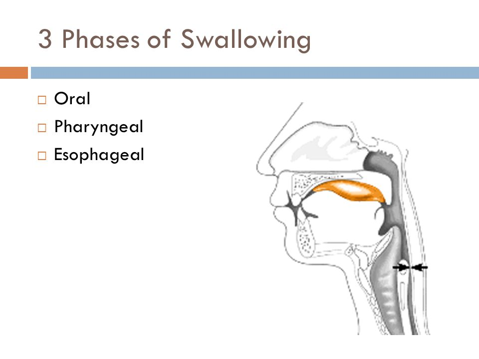 3 Phases of Swallowing Oral Pharyngeal Esophageal