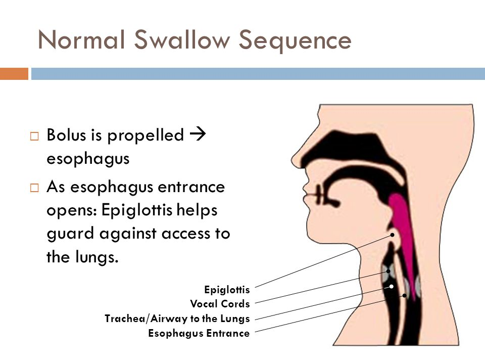 Normal Swallow Sequence