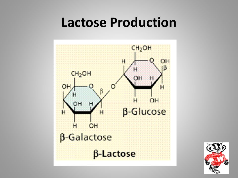 Lactose Production