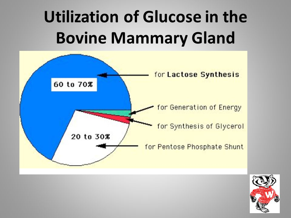 Utilization of Glucose in the Bovine Mammary Gland