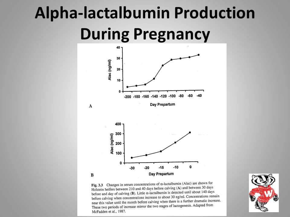 Alpha-lactalbumin Production During Pregnancy