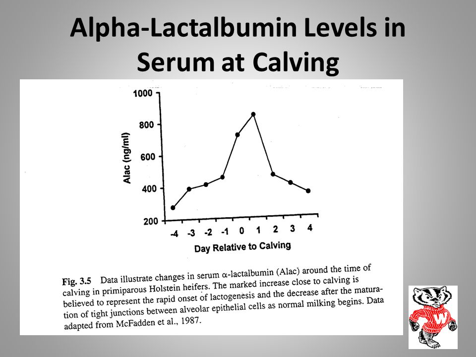 Alpha-Lactalbumin Levels in Serum at Calving