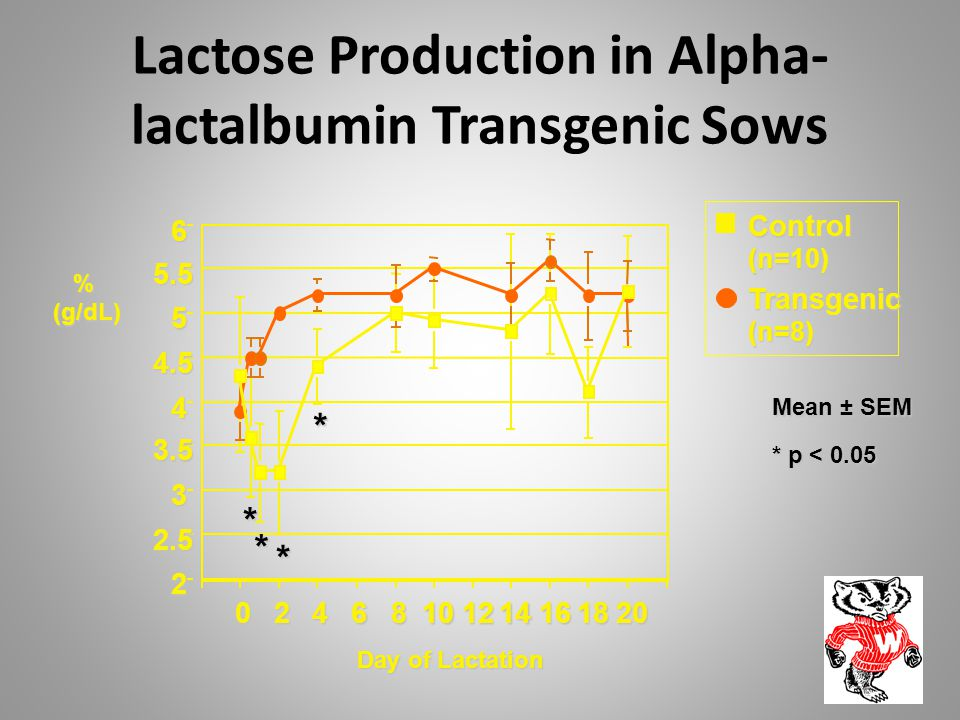 Lactose Production in Alpha-lactalbumin Transgenic Sows