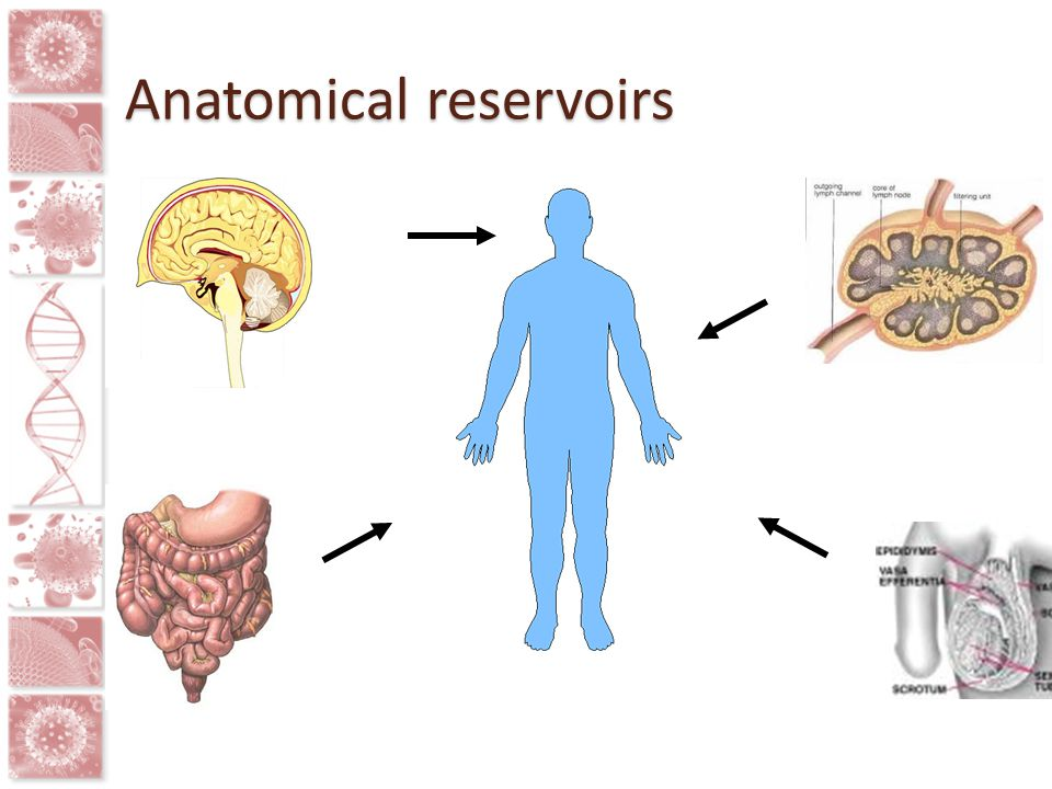 Anatomical reservoirs