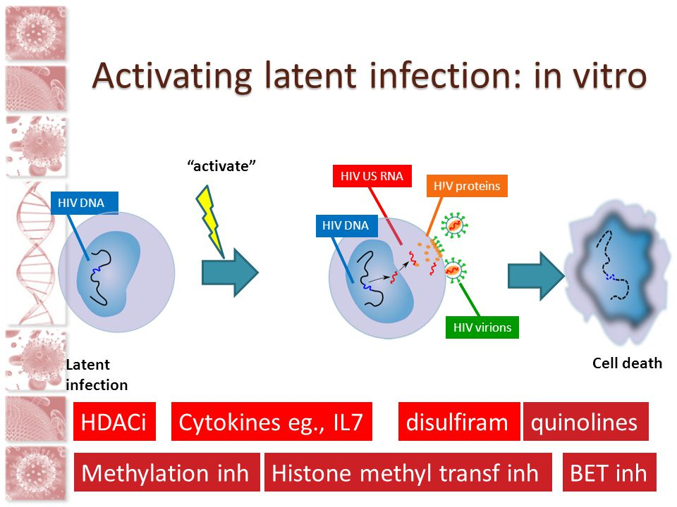 Activating latent infection: in vitro