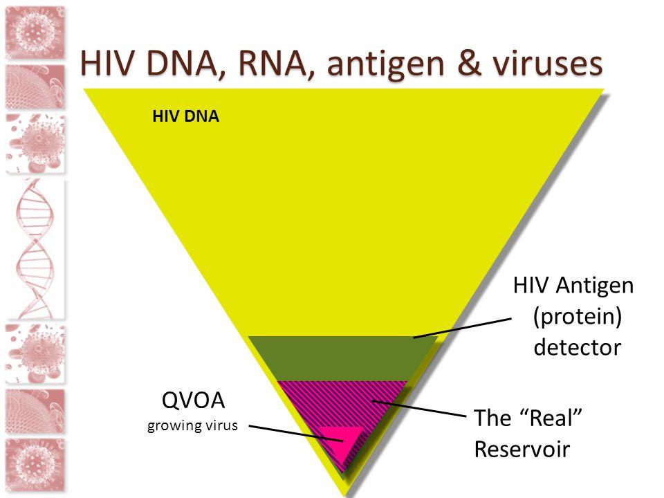 HIV DNA, RNA, antigen & viruses