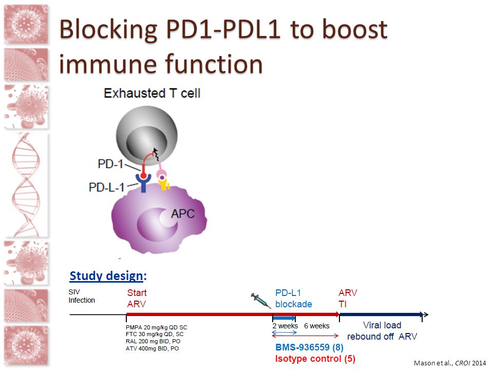 Blocking PD1-PDL1 to boost immune function