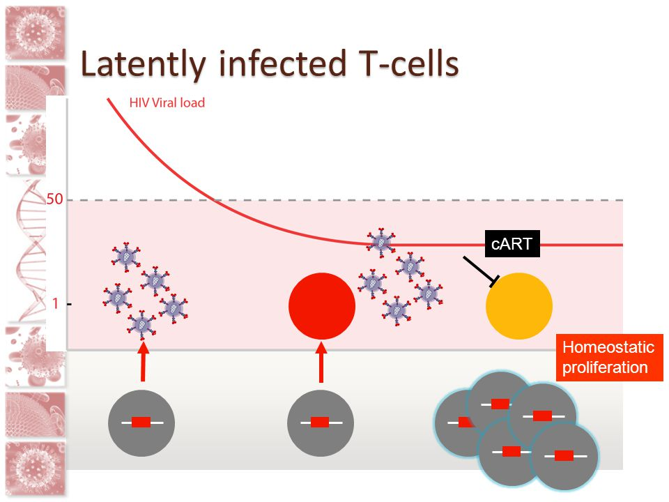 Latently infected T-cells