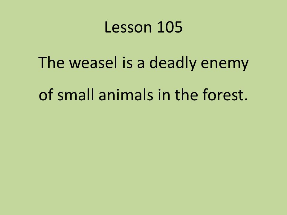 The weasel is a deadly enemy of small animals in the forest.