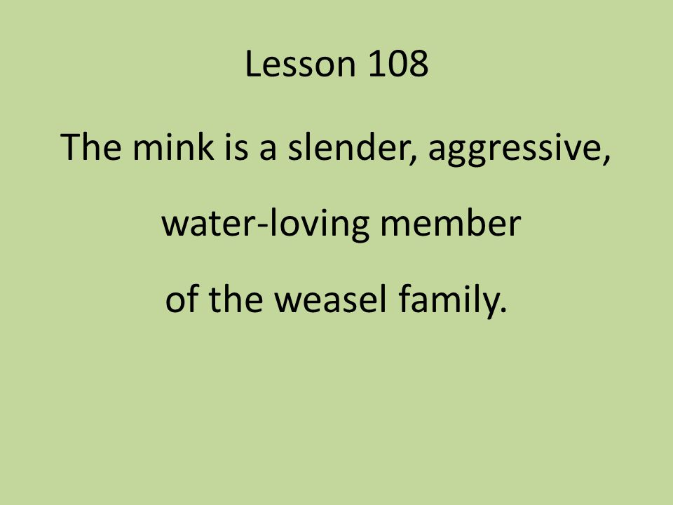 Lesson 108 The mink is a slender, aggressive, water-loving member of the weasel family.