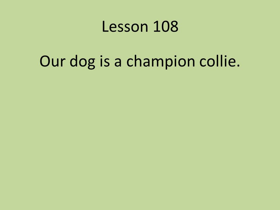 Our dog is a champion collie.